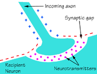Brain chemicals called neurotransmitters allow electrical signals to move from the axon of one nerve cell to the neuron of another. A shortage of neurotransmitters impairs brain communication.